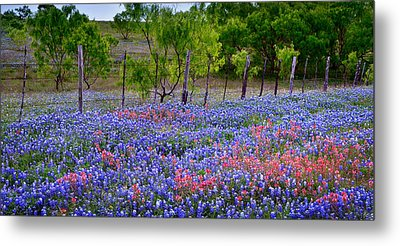 Metal Print featuring the photograph Texas Roadside Heaven -bluebonnets Paintbrush Wildflowers Landscape by Jon Holiday