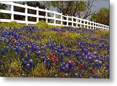 Texas Spring Metal Print by Brian Kerls