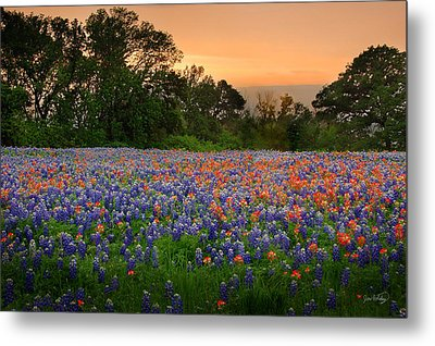 Texas Sunset - Bluebonnet Landscape Wildflowers Metal Print by Jon Holiday