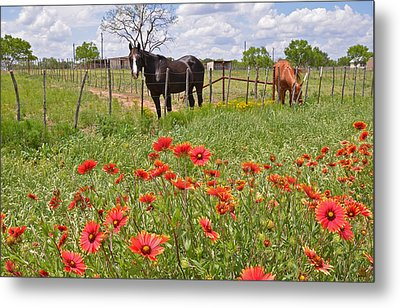 Texas Twosome Metal Print by Lynn Bauer