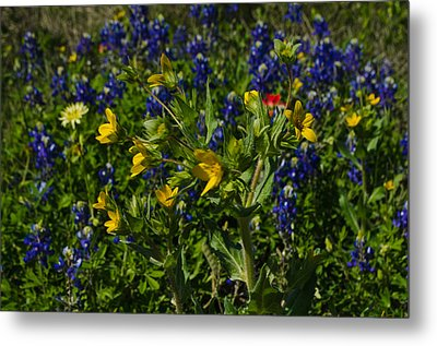 Texas Wildflowers Metal Print by Kelly Kitchens