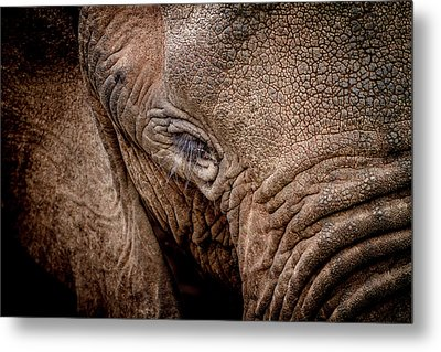 Metal Print featuring the photograph Texture Collection by Mike Gaudaur