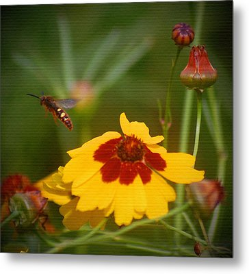 Metal Print featuring the photograph Textured Bee by Leticia Latocki