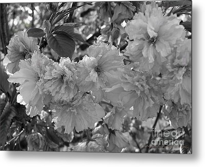 Metal Print featuring the photograph Textured Black And White Cherry Blossoms by Gena Weiser