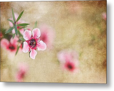Textured Blossoms Metal Print by Terry Ellis