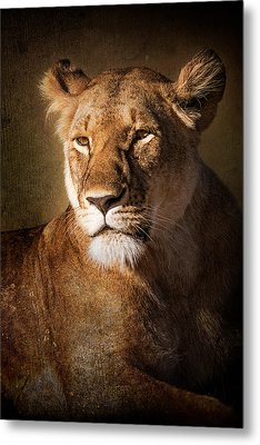 Metal Print featuring the photograph Textured Lioness Portrait by Mike Gaudaur
