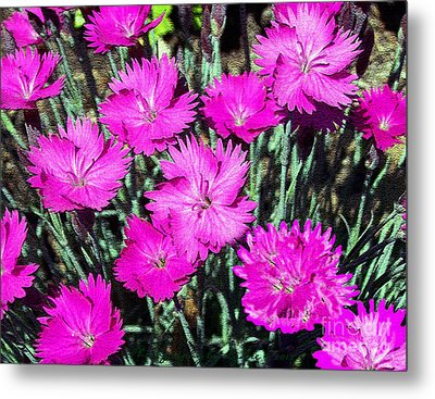 Metal Print featuring the photograph Textured Pink Daisies by Gena Weiser