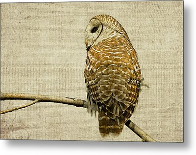 Textured Strix Varia Metal Print by Michel Soucy