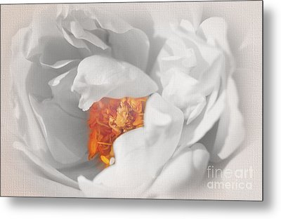 Textured Summer Rose Metal Print by Eden Baed