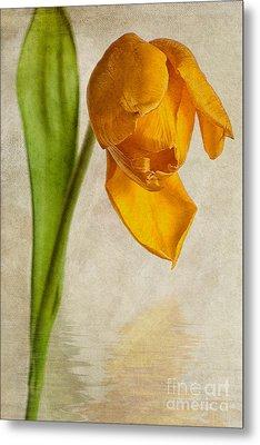 Textured Tulip Metal Print by John Edwards