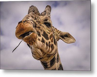 Thank You Metal Print by Mark Myhaver