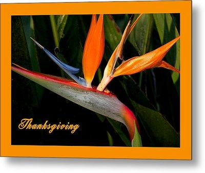 Thanksgiving Card Bird Of Paradise Metal Print by Rosalie Scanlon