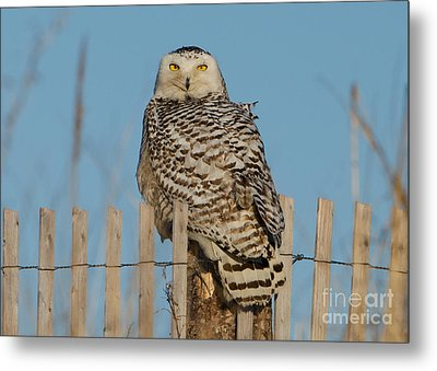 On Guard Metal Print