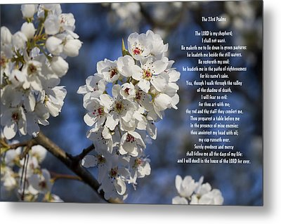 The 23rd Psalms Metal Print by Kathy Clark