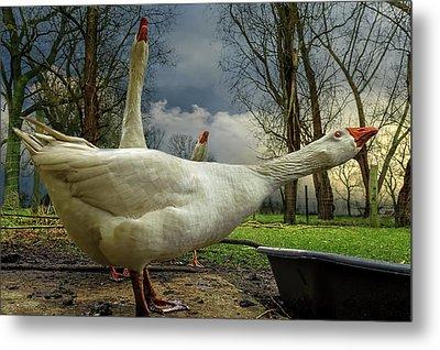 The 3 Geese Metal Print