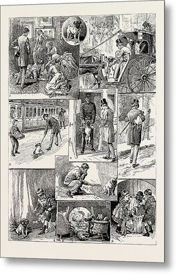 The Adventures Of The Dog Jim, 1889 1. Being Promised A Pet Metal Print