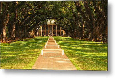 The Alley Of Oaks Metal Print