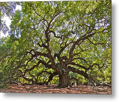The Angel Tree Metal Print by Eve Spring