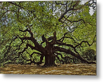 The Angle Oak Metal Print by Will Burlingham