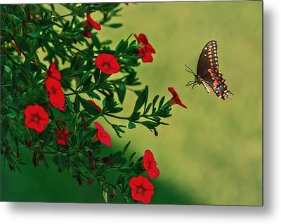 The Approach Metal Print by Tom York Images