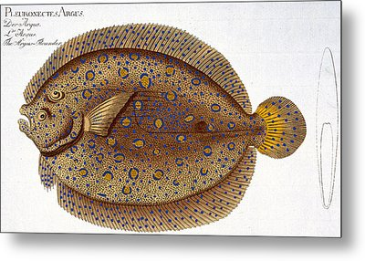The Argus Flounder Metal Print by Andreas Ludwig Kruger