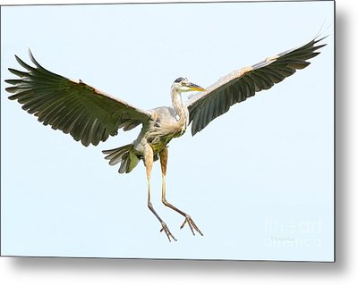 The Arrival Metal Print by Heather King