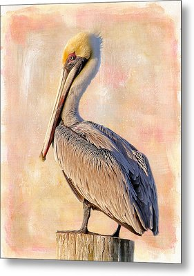 Birds - The Artful Pelican Metal Print by HH Photography of Florida