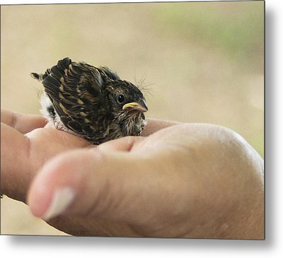 The Baby Wren Can't Fly Metal Print by B Wayne Mullins