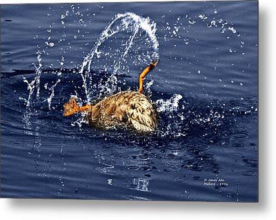 The Backstroke - Mallard Metal Print by James Ahn