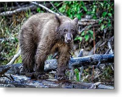 Metal Print featuring the photograph The Balance Beam by Jim Thompson