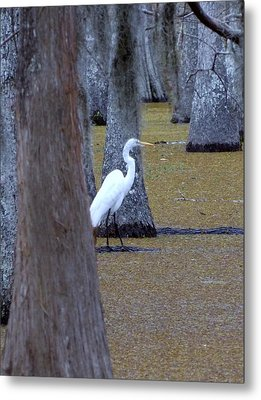 Metal Print featuring the photograph The Bayou's White Knight by John Glass