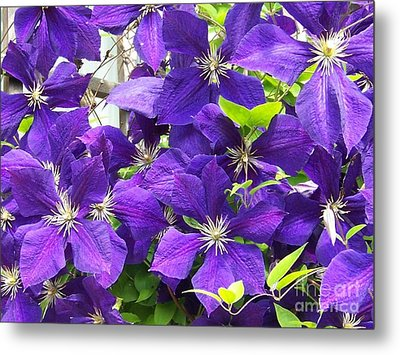 The Beauties Metal Print