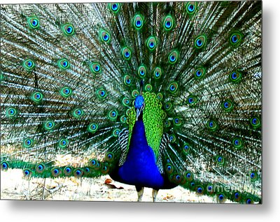 Metal Print featuring the photograph The Beautiful Plumage by Kathy  White