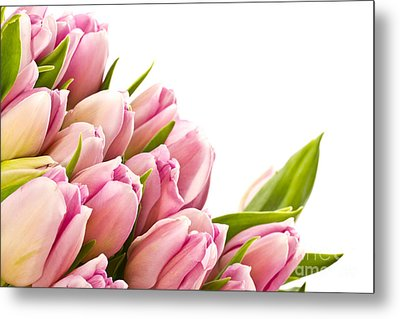 The Beautiful Purple Tulips Metal Print by Boon Mee