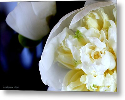 Metal Print featuring the photograph The Beauty Of A Single Flower by Mariana Costa Weldon