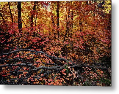 The Beauty Of Autumn  Metal Print by Saija  Lehtonen