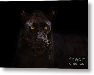 The Beauty Of Black Metal Print by Ashley Vincent