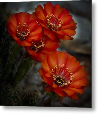 The Beauty Of Red Metal Print by Saija  Lehtonen