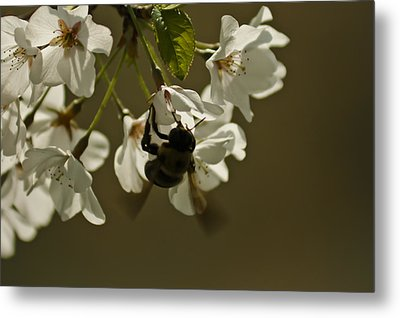 The Bee Metal Print
