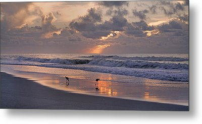 The Best Kept Secret Metal Print by Betsy Knapp