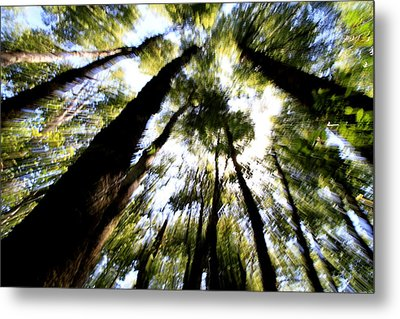 The Bewitched Forest Metal Print