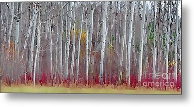 The Birches Panorama  Metal Print