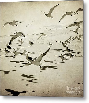 The Birds Metal Print by Sharon Coty