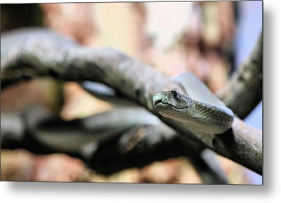 The Black Mamba Metal Print