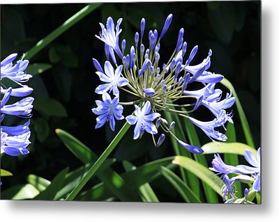 The Blue Metal Print by Ivete Basso Photography