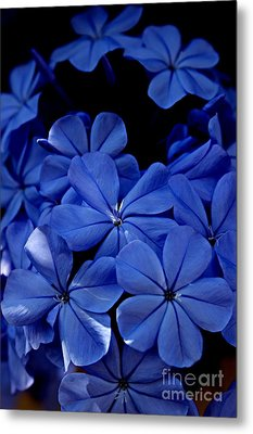 The Blues Metal Print by Clare Bevan