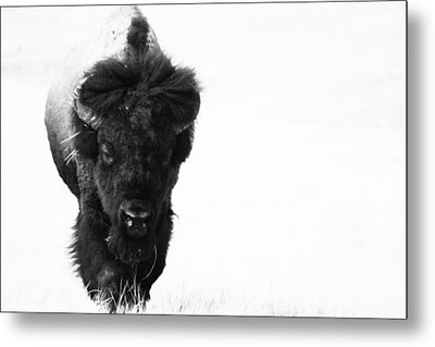 The Boss Metal Print by Michele Richter