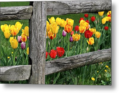The Brighter Side Metal Print by Diana Angstadt