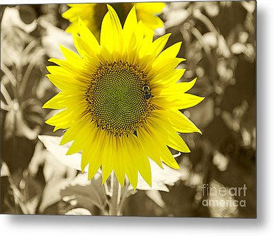 The Brightest In The Bunch Metal Print by John Debar