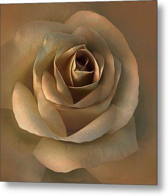 The Bronze Rose Flower Metal Print by Jennie Marie Schell